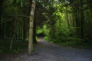 One of the trails that Yeats frequently walked, May 27th 2013 at Lady Gregory's Estate in Coole Park